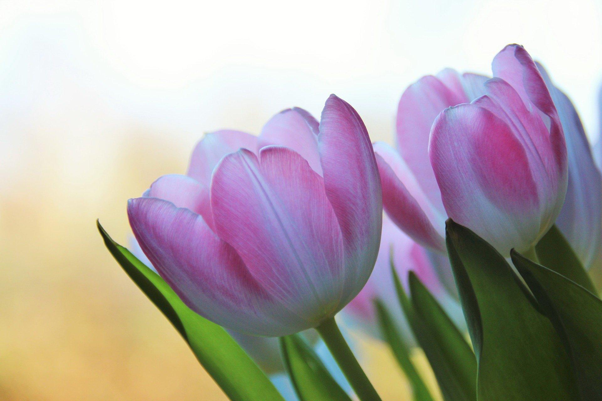 Dziś przynoszę ci kwiaty, wierszyk na Dzień Mamy