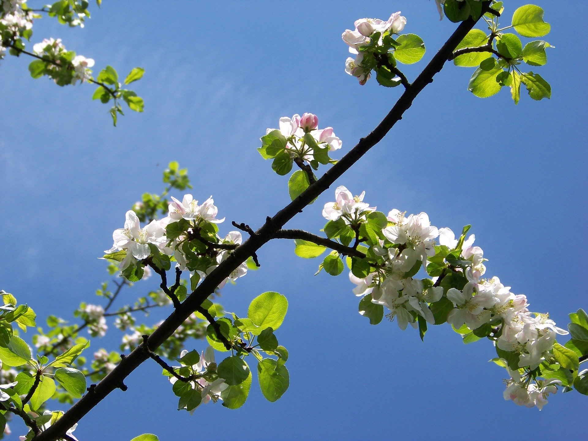flower-790190_1920