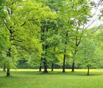 park zieleń drzewa