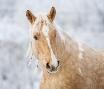 Wierszyk dla dzieci o koniach