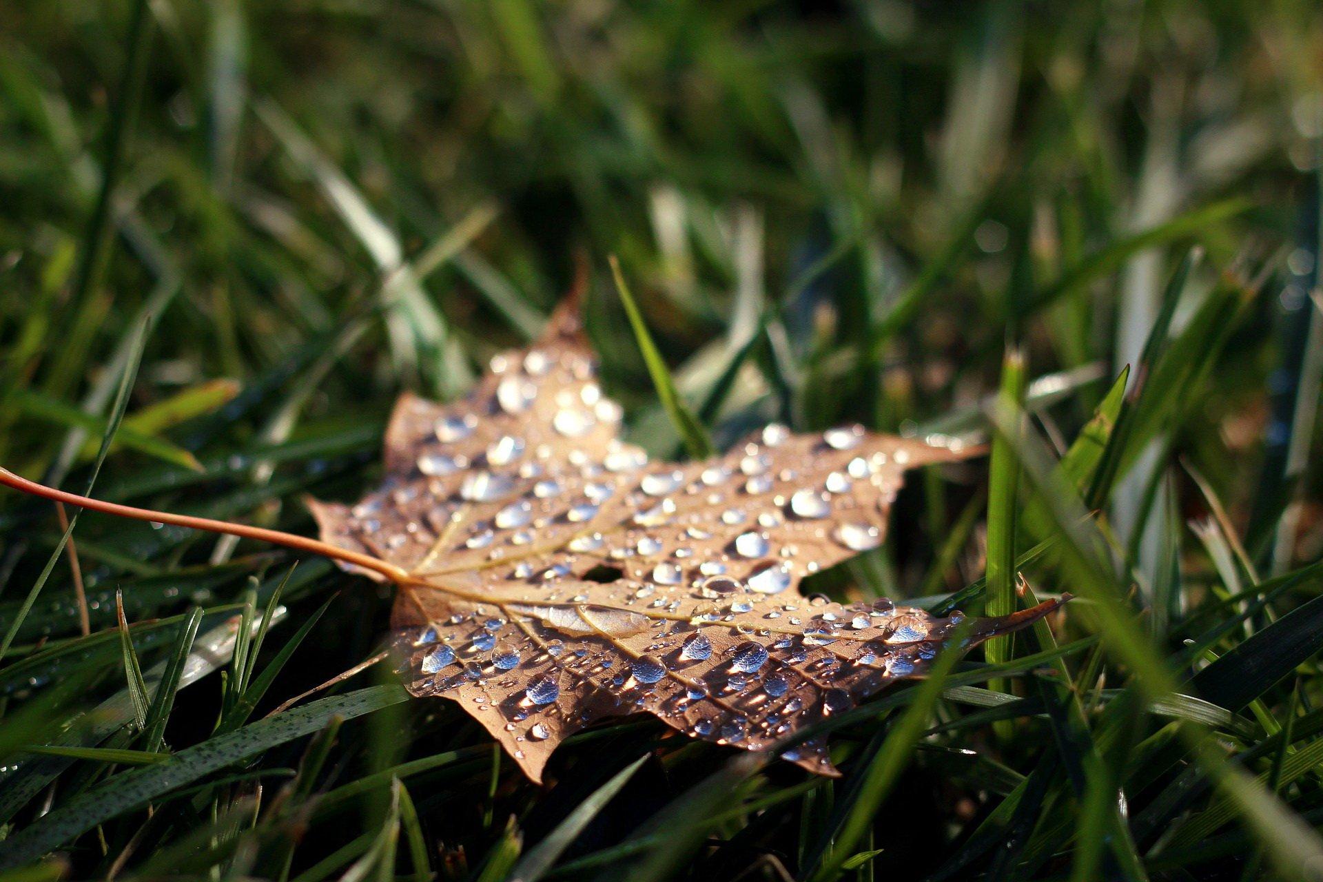jesien listopad piosenka dla dzieci na jesień