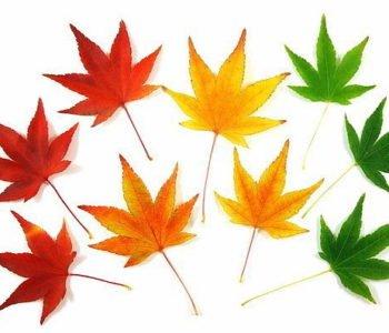 jesienny-kujawiaczek