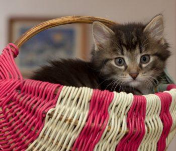 Kotek Puszek