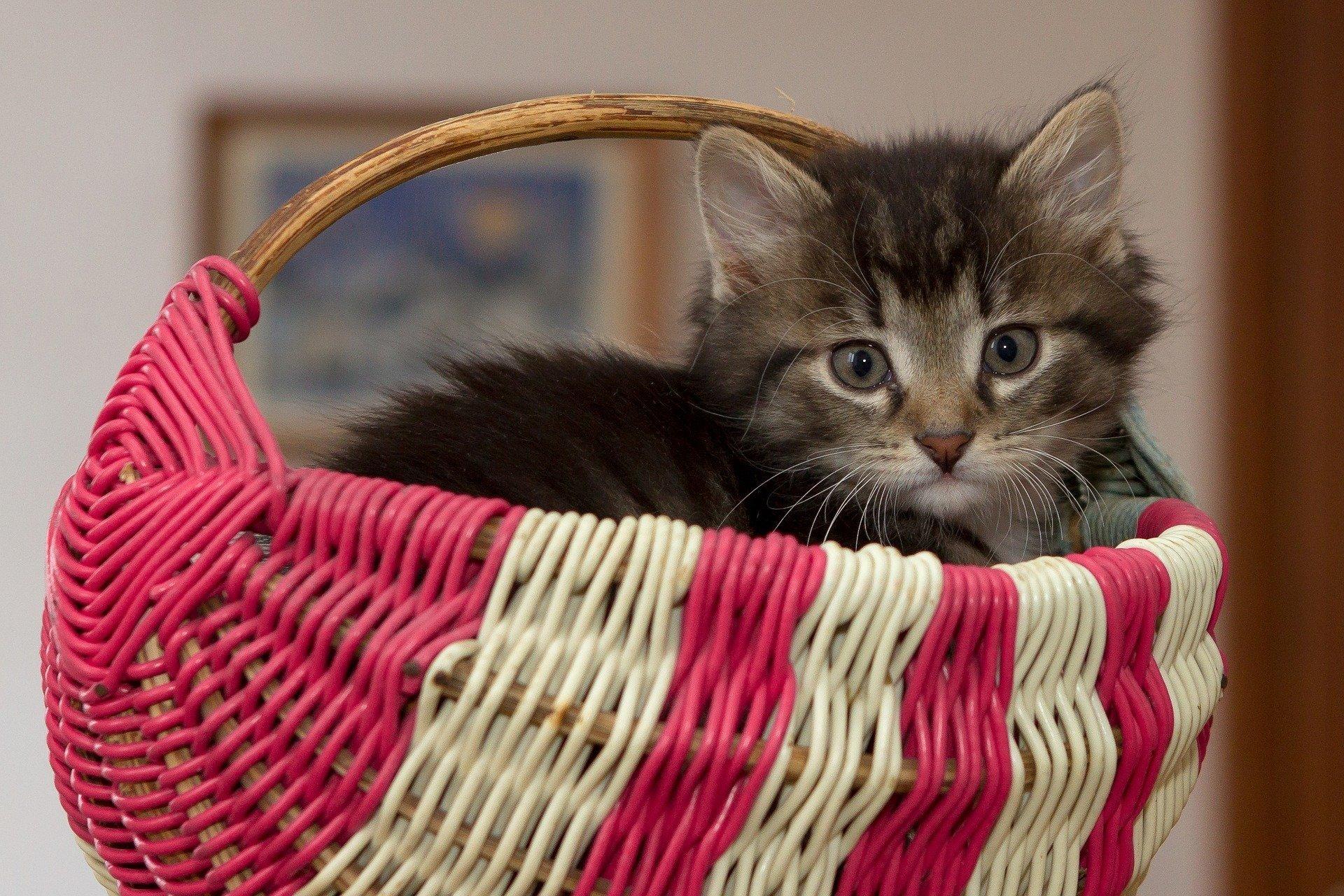 Kotek Puszek wierszyk dla dzieci o kotku
