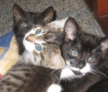 kocio-koteczki