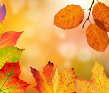 Kolorowe listki piosenki dla dzieci jesień