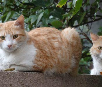 Były raz kotki dwa