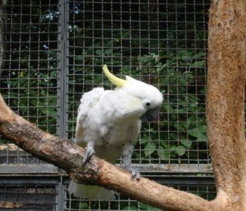 Kolorowe ptactwo