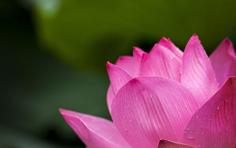Mowa Kwiatów – wróżba andrzejkowa