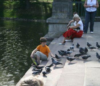 Karpie i gołębie przy Pąłacu