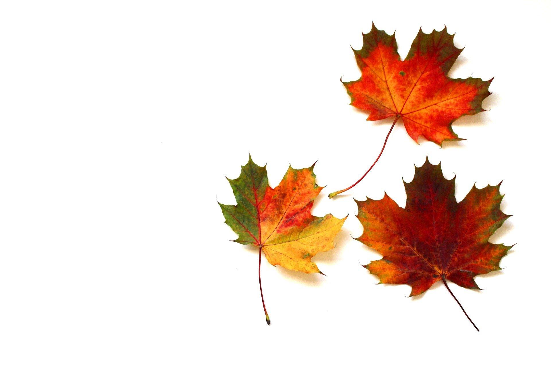 Kolorowe listki, piosenka dla dzieci o jesieni, tekst i muzyka