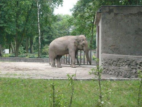 lodzki-ogrod-zoologiczny