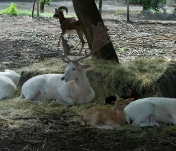 maly-ogrod-zoologiczny-w-turce-klublina