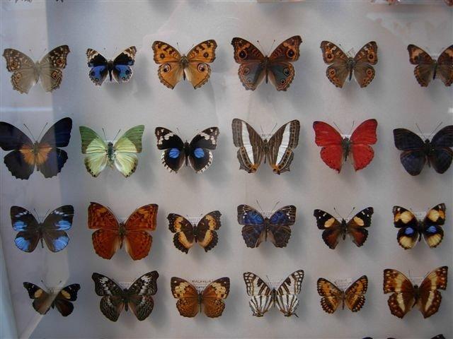 muzeum-motyli-we-wladyslawowie
