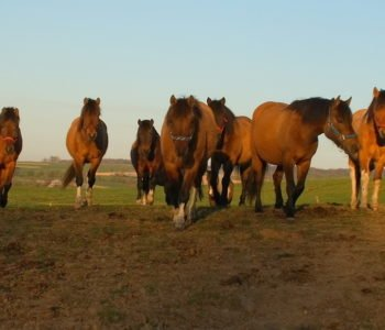 Stadnina koni huculskich w Nielepicach