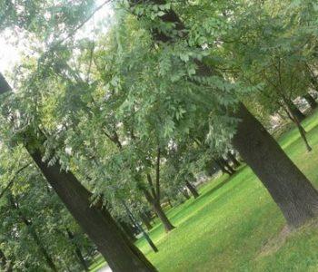 Park Krakowski