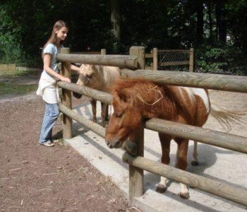ogrod-zoologiczny-w-krakowie