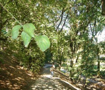 Las i wspinaczka