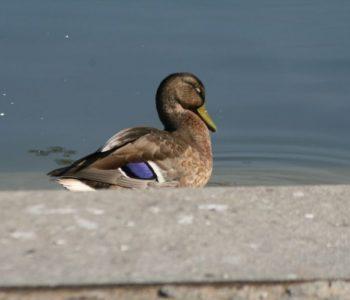 Altanka pełna ptactwa