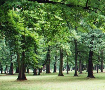 Park Andersa