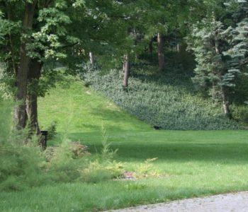 Fortyfikacje i las
