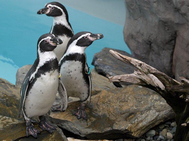 zoo kRaków