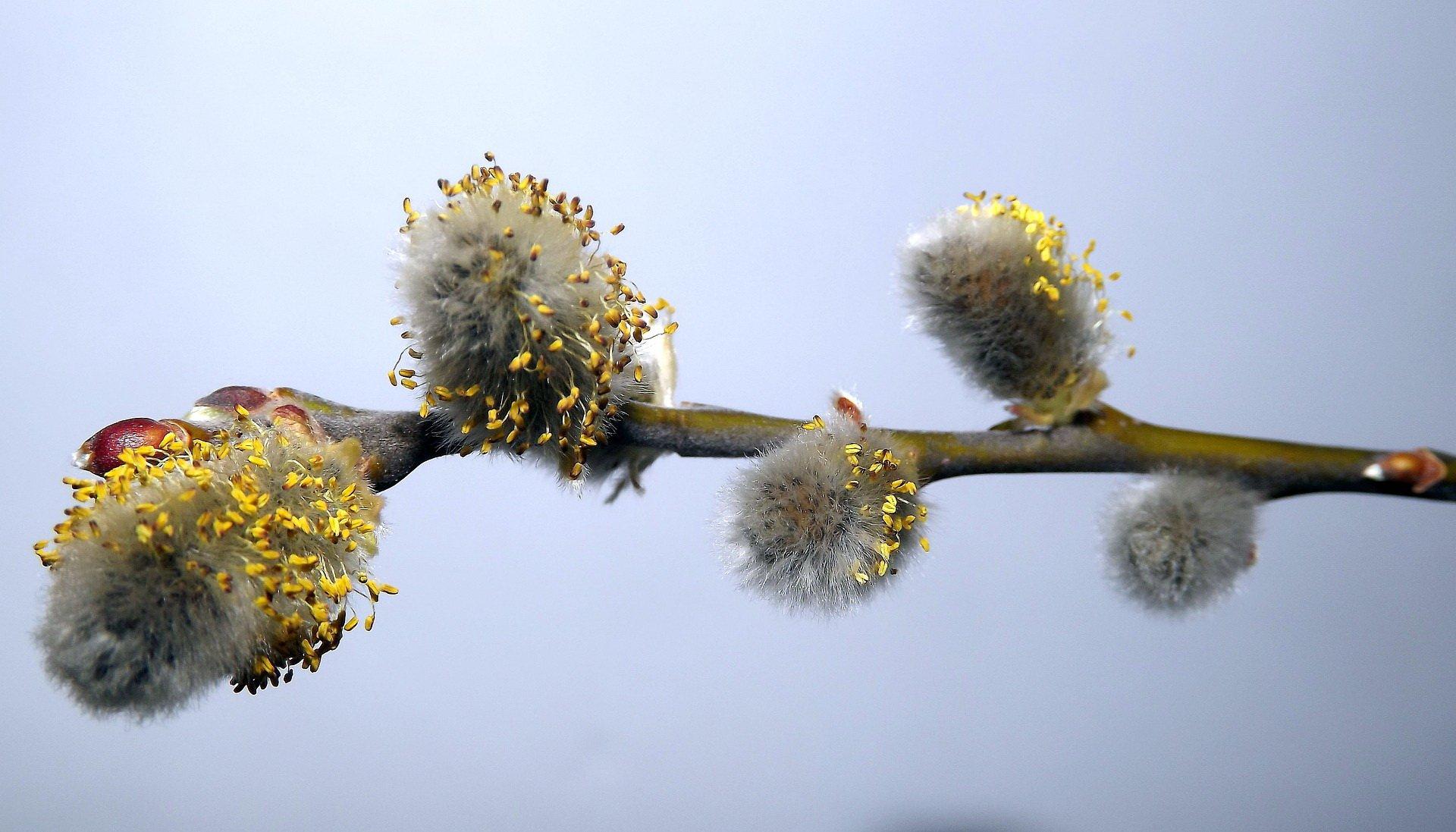 wierszyk dla dzieci bazie Wierzbowe gałązki teksty na powitanie wiosny