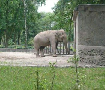 Ogród Zoologiczny