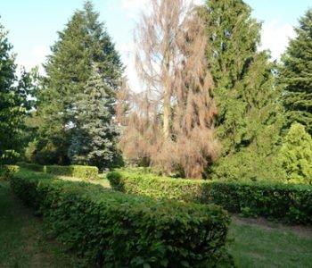 Ogród dendrologiczny