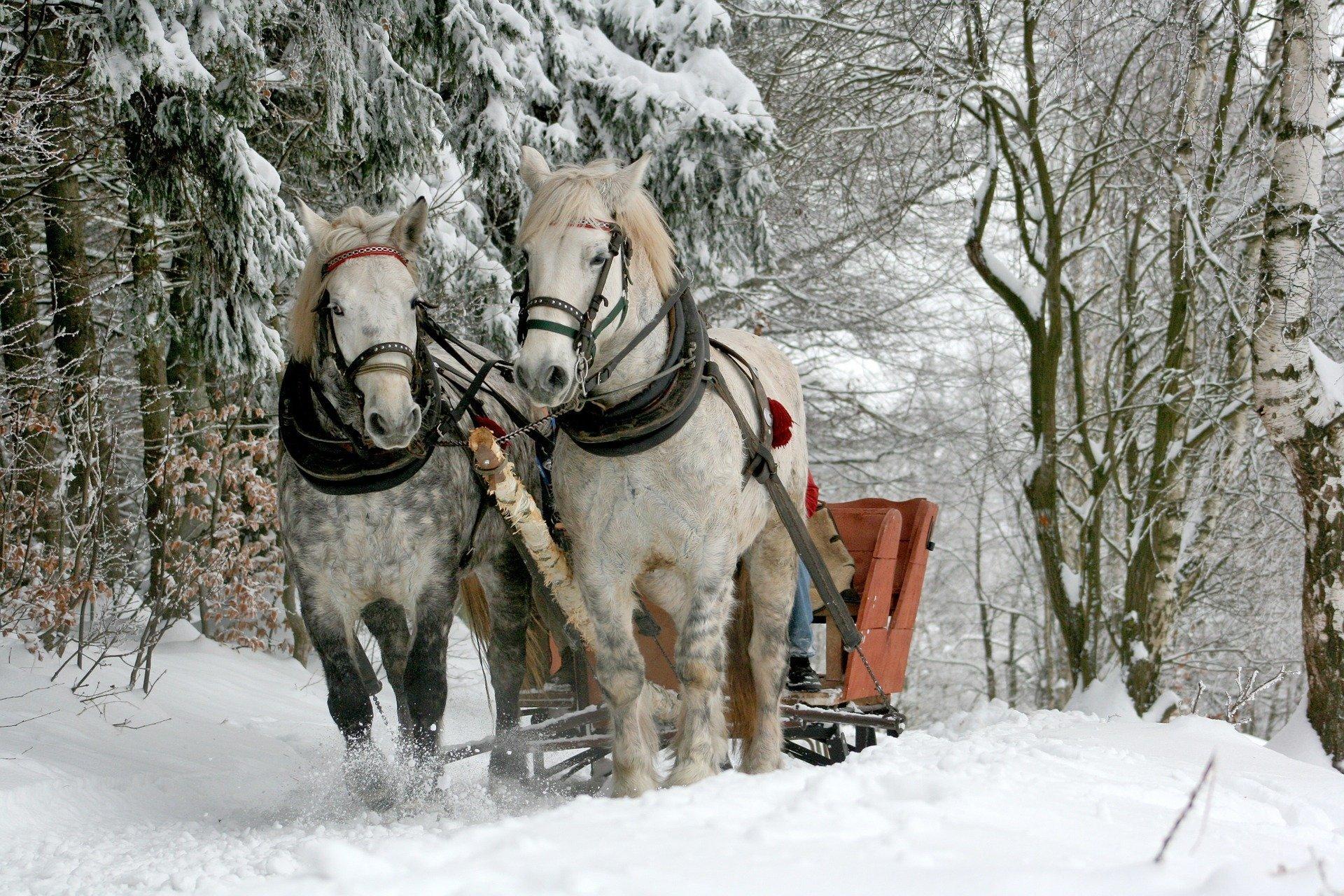 Pędzi kulig wierszyk dla dzieci na zimę
