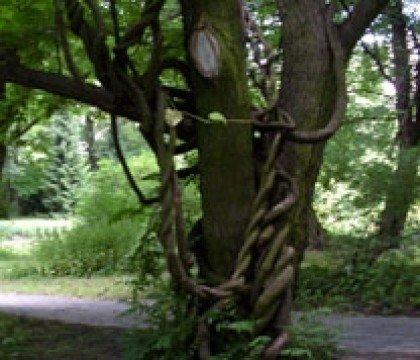 przedziwne drzewo