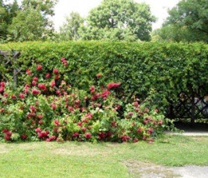 Rosarium i różana altanka