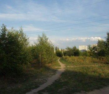 Lasek przy Konstantynowskiej