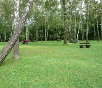 Piknik wśród brzóz