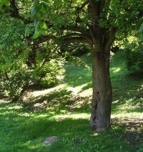 miejsce na piknik