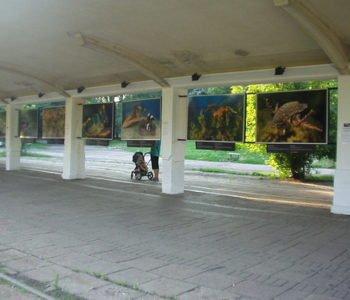 Krańcówka tramwajowa