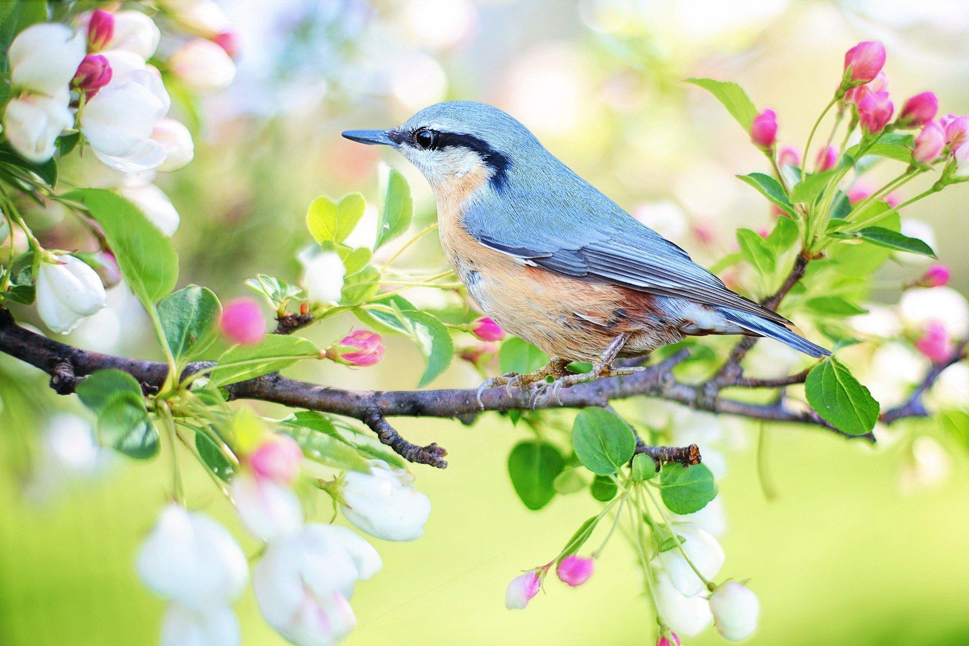 Wiosna radosna wiersz dla dzieci na wiosnę