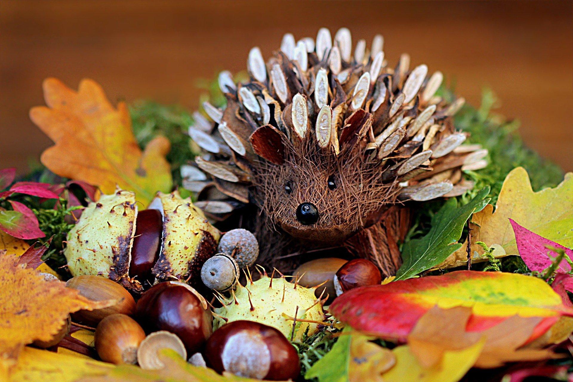 Kolczasty jeż piosenki dla dzieci na jesień