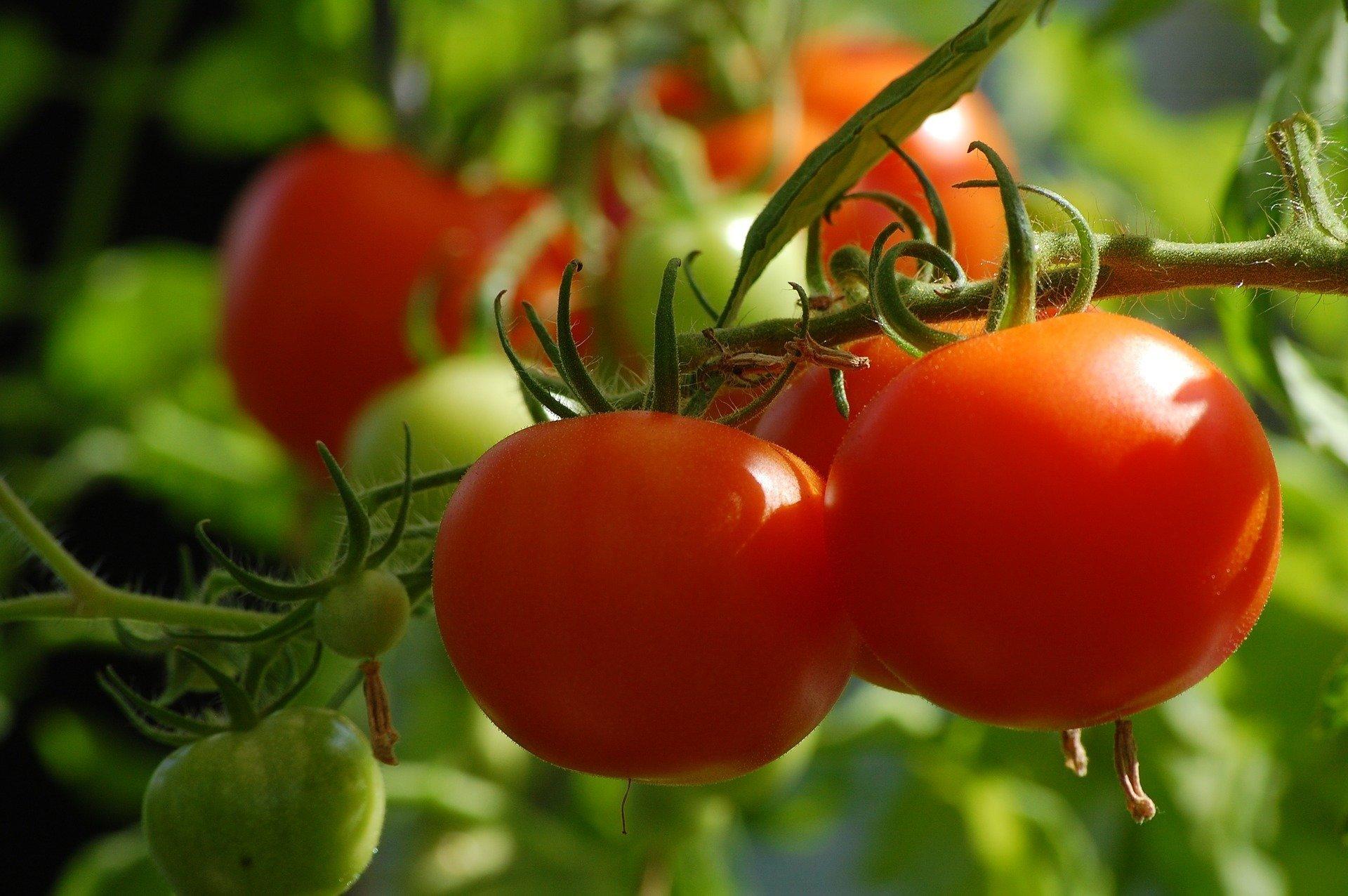 Pomi Pomi Pomidorek Wierszyk Dla Dzieci O Pomidorkach