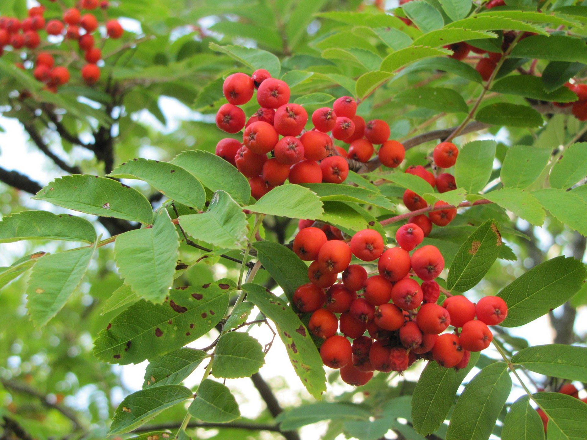 Jarzębinowa piosenka piosenki dla dzieci na jesień