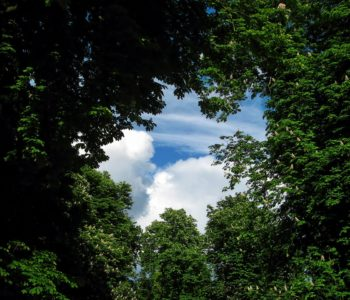 park drzewa