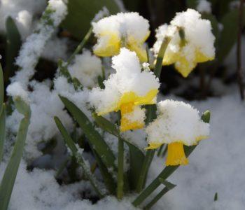 wiosna Czesław Janczarski wierszyk wiosenny