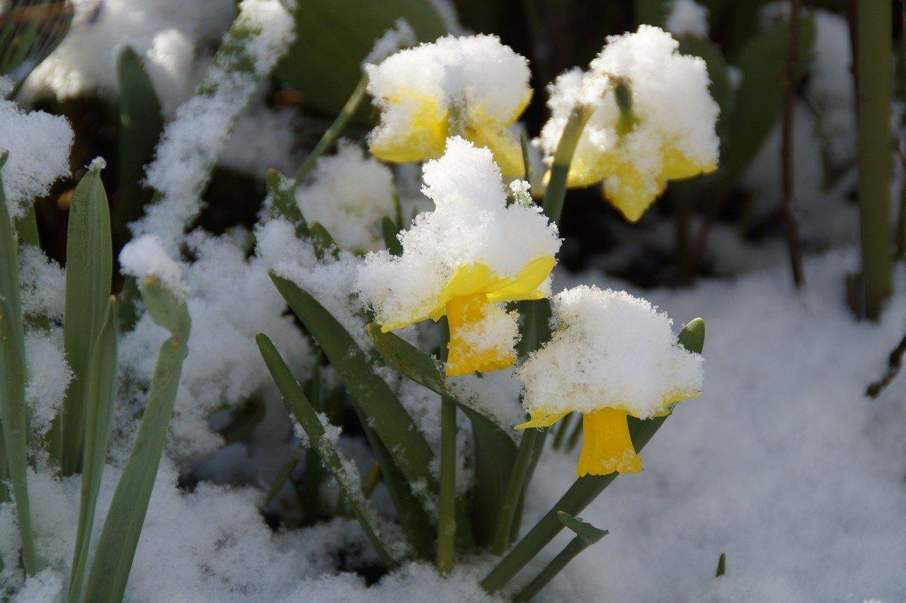 tytuł wiosna