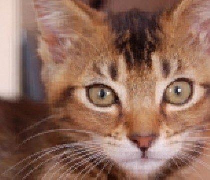 wesoly-kot-budzik