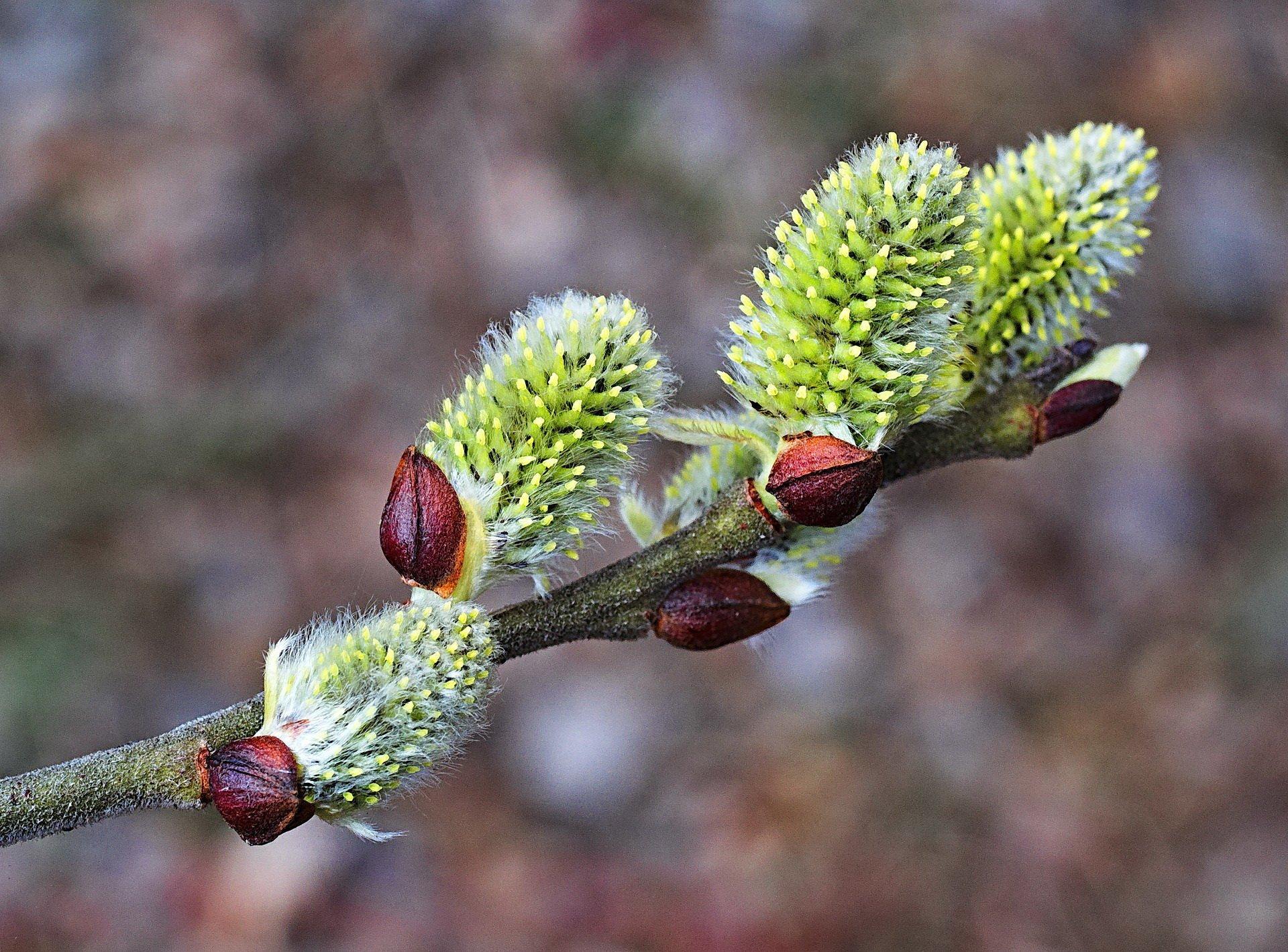 kotki marcowe wierszyk dla dzieci na powitanie wiosny