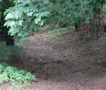 Spacerkiem po lesie do Diabelskiego Kamienia