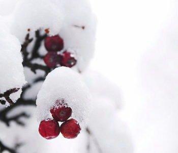 zimowa-polka