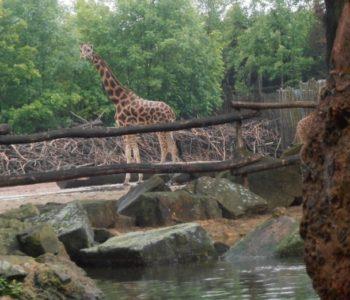 Zoo - Niemcy