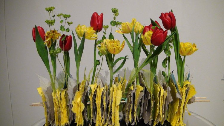 Podróże-z-tulipanem