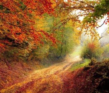 W karzełkowie jesień złota wierszyk na jesień